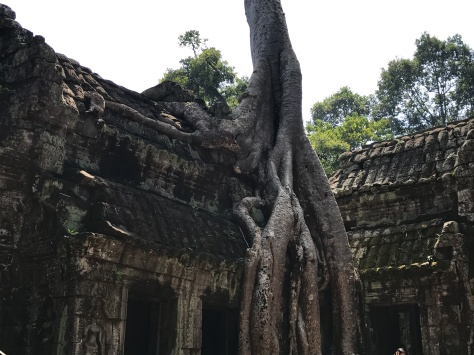 The trees have grown around the temples